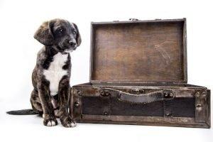 viajar con animales a estados unidos
