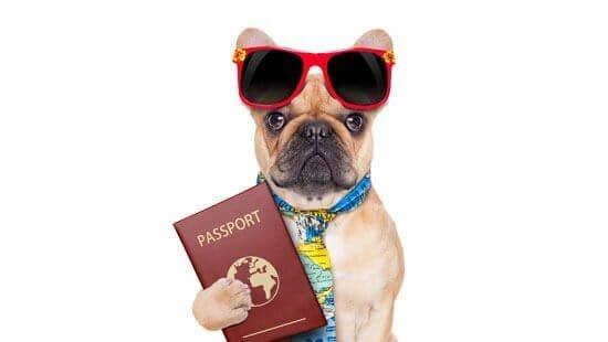 Información sobre importación de animales a Europa