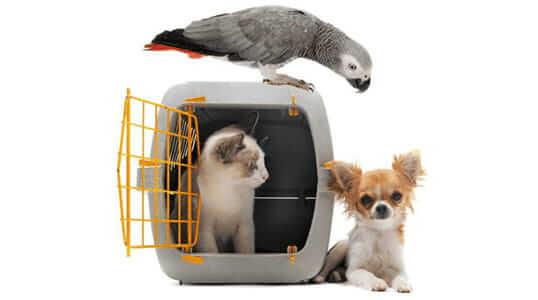Importación de animales a Colombia (perros y gatos)