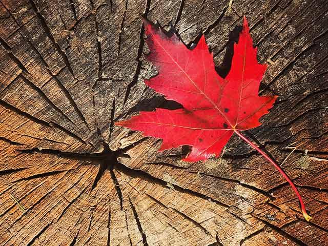 Servicios asociados de mudanza a Canadá