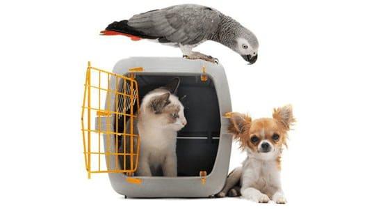 Einfuhr von Tieren