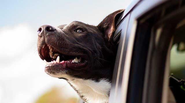 ¿Cómo enviar un perro a otro país?