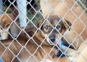 Estafa en la venta de mascotas en España